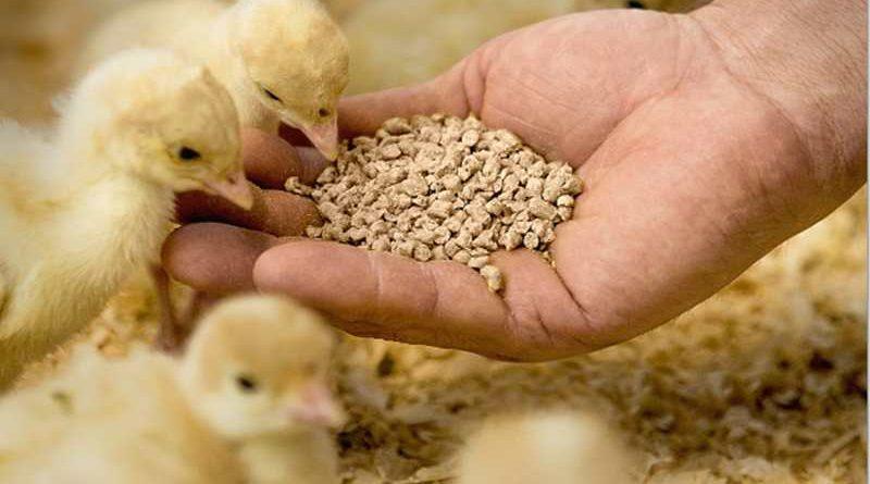 Estudo da BASF sobre suplementação para frangos de corte recebe prêmio Lamas na Conferência FACTA WPSA-Brasil