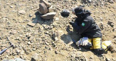 Pesquisadores brasileiros apresentam fóssil de lagostim da Antártica