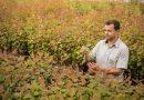 Centro de Tecnologia da Suzano em Jacareí desenvolve projeto inovador de clones de eucalipto