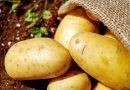 Ingrediente essencial do prato do brasileiro, a batata enfrenta desafios no campo
