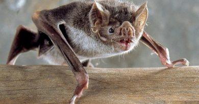 Vale do paraíba recebe operação para controle de morcegos hematófagos