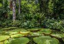 Suzano e WRI Brasil promovem parceria para desenvolver projeto de Regeneração Natural Assistida em larga escala na Amazônia brasileira