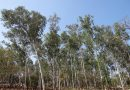 Suzano realiza ações sustentáveis para a preservação do Meio Ambiente