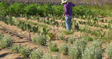 Embrapa cria produto capaz de aumentar resistência vegetal à seca