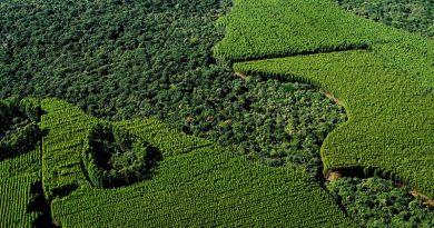 Suzano SA Unidade Florestal