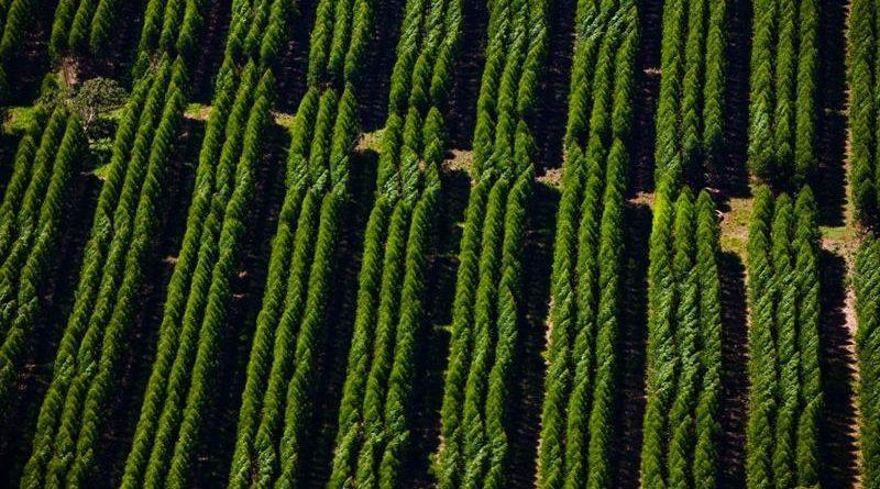 Florestas Suzano