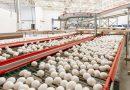 Emirados Árabes são responsáveis por mais de 70% das exportações de ovos brasileiros