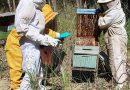 Com apoio da Suzano, apicultores aumentam produção do mel e ganham destaque durante a pandemia
