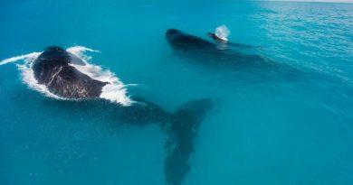 Cidade de Prado (BA) se prepara para chegada das baleias jubartes