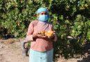 Cervejas regionais da Ambev mais que dobram impacto na agricultura familiar