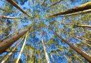 Suzano realiza manejo florestal responsável em São Paulo com monitoramento de biodiversidade e desenvolvimento sustentável